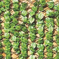 Apollo Willow Watermelon Leaf Roll-Up Trellis 2 x 1m